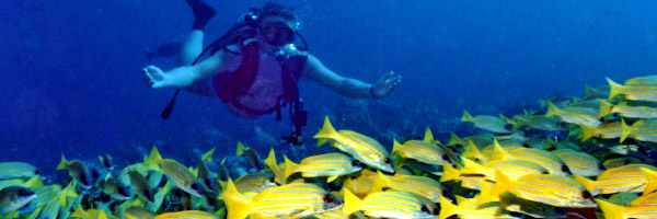 Banana reef maldives
