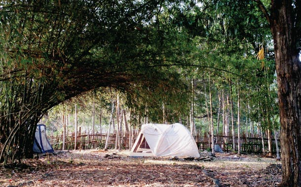 Camping under a canopy of tress