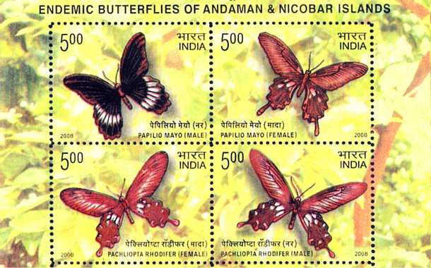 Andaman Butterfly Stamp