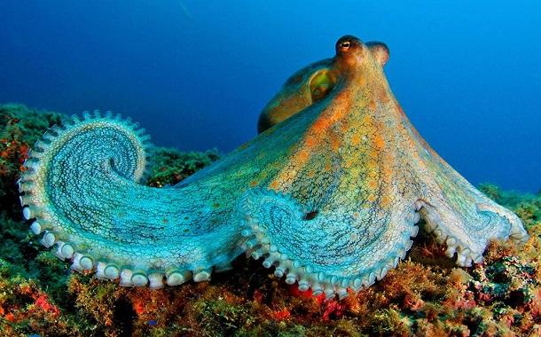 Cephalopods, Malaysia