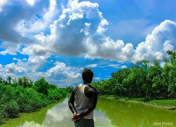 Mangroves, Sundarbans