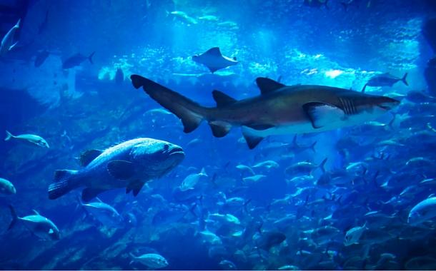 Shark Diving in Dubai Mall