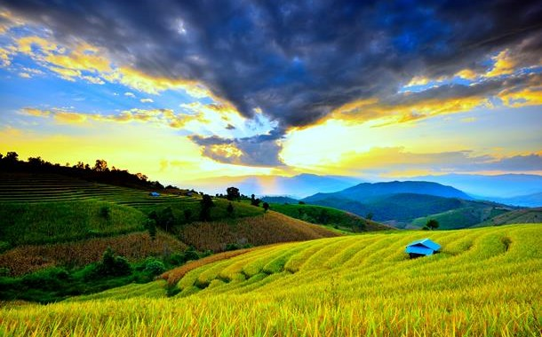 terrace-rice-fields-in-khonoma-as-seen-from-the-fort