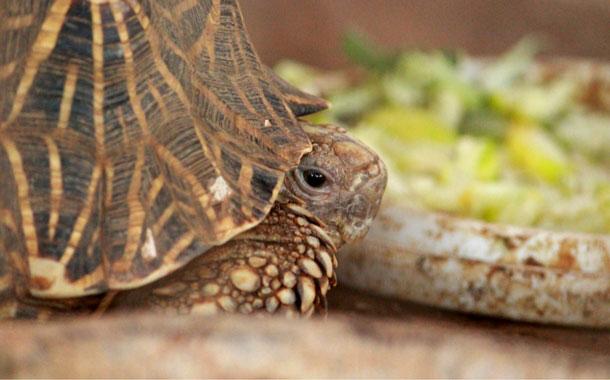 Tortoise at Nagarhole National Park