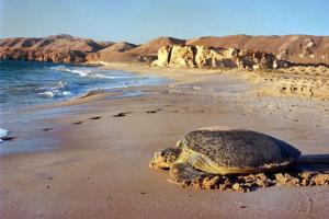 Oman places to visit in 2015