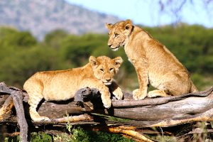 Tanzania best places to visit in 2015