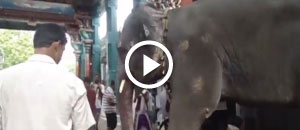 Unusual elephant encounter at Pondicherry's Ganesha temple